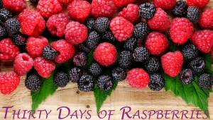 30 Days of Raspberries_Blog